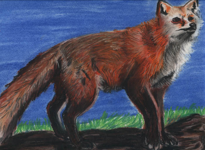 86650a43 Dodgy pic of a red fox done with pastel pencils.