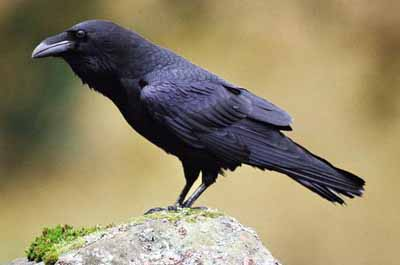 The Makrin siblings Raven%20sitting